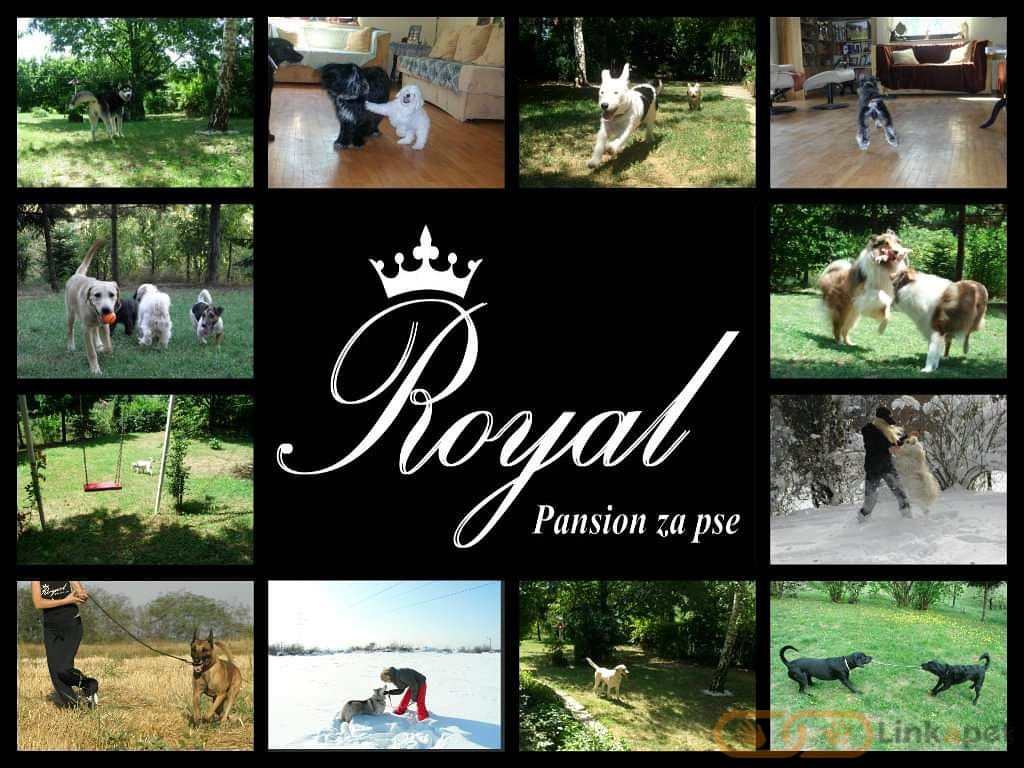 Royal - pansion za pse
